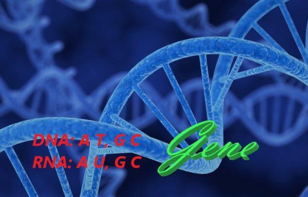 Oligonucleotides/Nucleoside(acid)